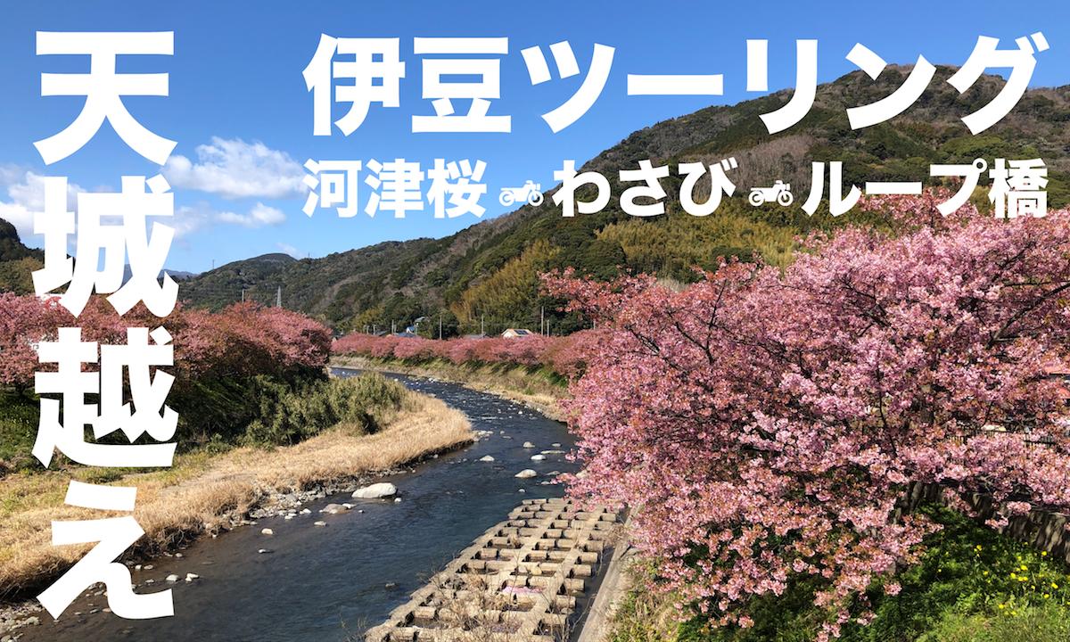 春先取り!わさび香る、伊豆の河津桜満開ツーリング